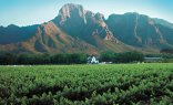 Full Day Hermanus Tour